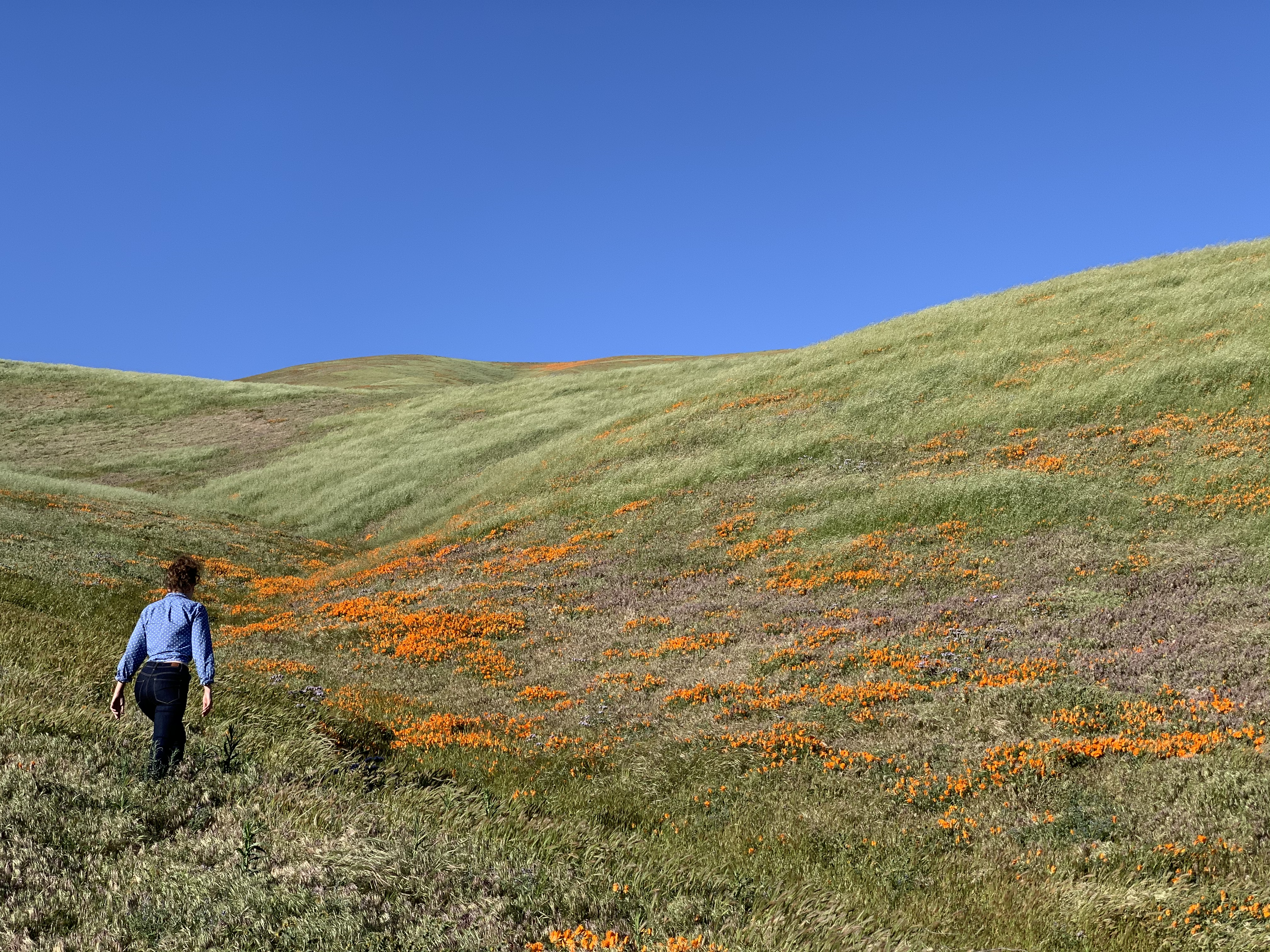 Alexx hiking up a hill of California poppies