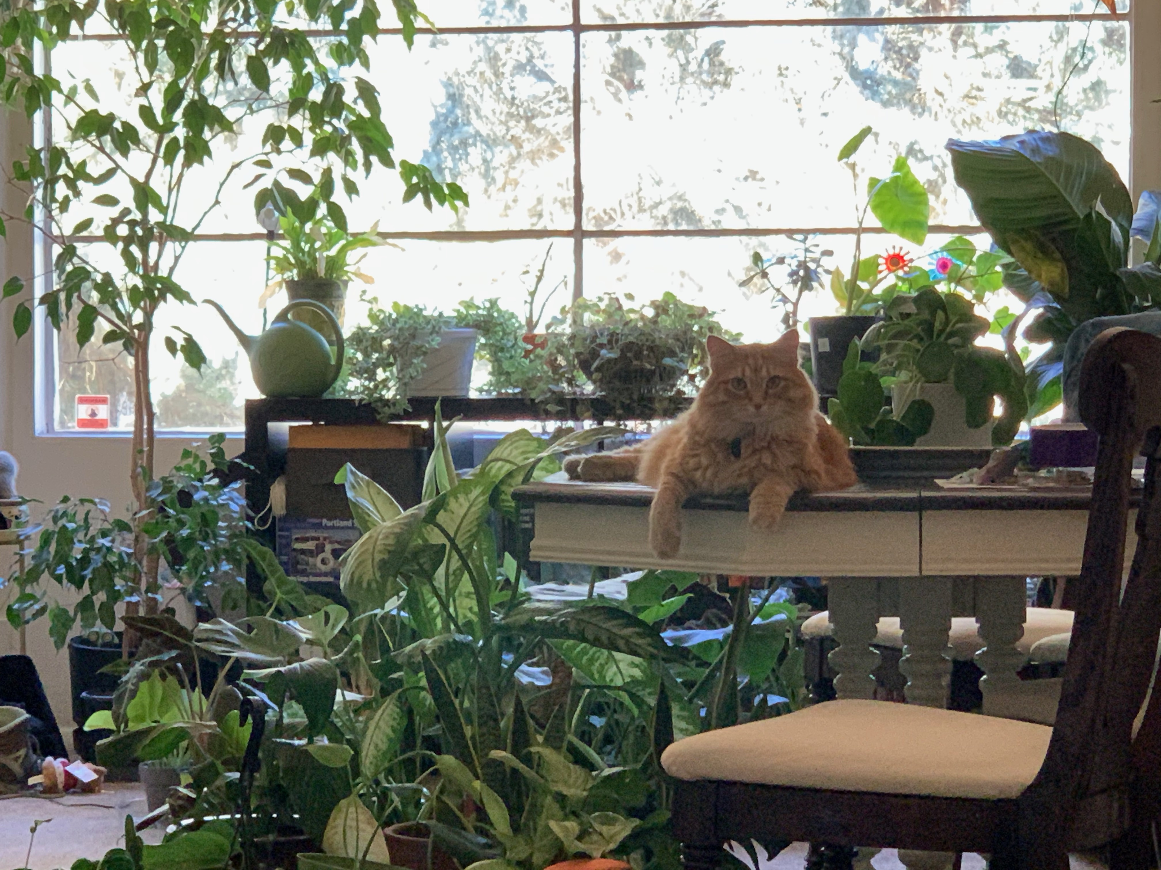 Loki vibing in a forest of houseplants
